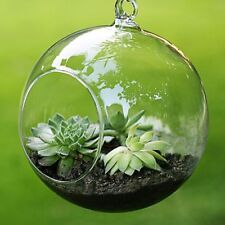 Plants Vase Hanging Glass Round Balls Micro Landscape Air Decors Home Decoration