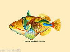 Hawaii Humuhumunkunukuapua'a Fish United States Travel Advertisement Art Poster