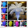 Beautiful high-quality natural ostrich feathers! 10/20/50 only 15-55cm 6-22 inch