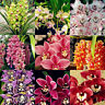 Qu_ BL_ 100Pcs Cymbidium Orchid Seeds Flower Plant Garden Office Balcony Bonsai