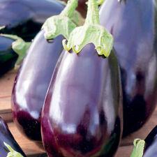 15+ Eggplant Black Beauty Seeds   NON-GMO   Fresh Vegetable Garden US SELLER