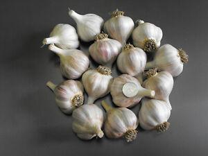 German White Garlic for Planting or Eating. 2 lbs.