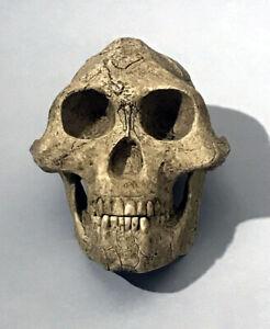 """Australopithecus Afarensis """"Lucy"""" """"Economy"""""""