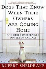 Dogs That Know When Their Owners Are Coming Home & Other Unexplained Powers
