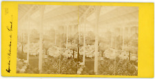 Stereo Belgique, Gand, Exposition d'horticulture, circa 1870 Vintage stereo