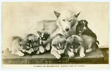 Vintage 1939 Rppc Alaskan Malamute Mama Puppies Sledge Dog of Yukon Can Musher