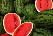 400 Seeds  Jubilee  Watermelon Seeds new seeds for 2017 Non-GMO Heirloom