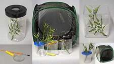Stick Insect Cage The Ultimate Rearing Kit