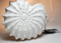 Hallmark Signature: Sea Shell - 2016 Keepsake Ornament