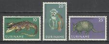 Suriname Reptile Caiman Singe Saimiri Tatou Armadillo Monkey Gurteltier ** 1969