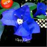 100 PCS Seeds Blue Bougainvillea Spectabilis Flowers Perennial Plants Bonsai New