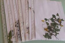 6 gepresste Pflanzen für Herbarium, frei wählbar aus über 400