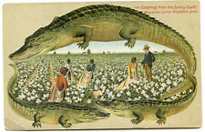 Alligator Border Florida 657 Black Americana Cotton Blossoms Grow in Sunny South