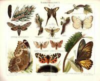 2 Lithographies Papillon Vieux Impression Papillons Original 1897 Lithographie