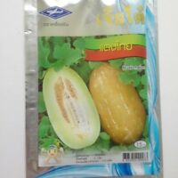 135 seeds Musk Melon Cucumis melo from thailand