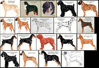 WORKING DOGS (A - K) COUNTED CROSS STITCH PATTERNS