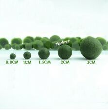 Marimo Moss Balls Variety Pack 5 Balls 0.25-1.5 Inch Live Plant Aquarium Tank