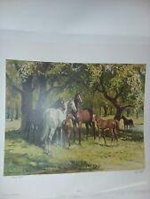 "HORSE ART PRINT "" SUMMERTIME  "" SIGNED AND NUMBERED by SAM SAVITT"