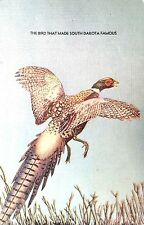 Vintage Postcard of The Bird that Made South Dakota Famous: Pheasants 8089