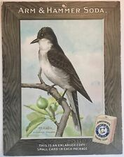 Birds - Arm & Hammer Advertising Store Display Card Sign - Flycatcher (Kingbird)