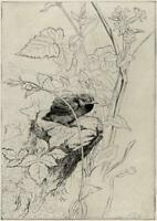 GEORGE EDWARD COLLINS (1880-1968) Signed Etching BIRD IN TREE STUDY