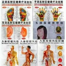 Whole body English Acupuncture Meridian Acupressure Points Poster Chart Wall Map