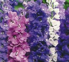 Delphinium - Magic Fountains Mixed - 50 Seeds