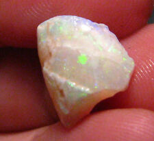O&Co rough opal coober pedy ???? fossil shell collection 4.05ct