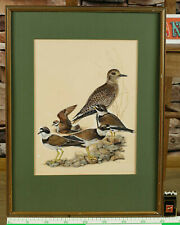 unleserlich signiert Ritter antikes Aquarell Vögel Regenpfeifer Dircksen Malerei