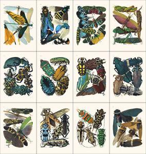 Set of 12 Art Nouveau Insect prints A4 unframed natural history botanical