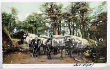 Postcard Argentina um 1908 - Mulas De Carga Pasando La Linea (Rio Negro)