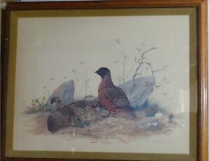 "Robin Hill Naturalist Artist ""Masked Bobwhite"" Print Signed 1978"