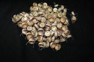 """Lot 25 ORNAMENT CAPS 3/4"""" Gold resemble Krebs Rauch Ornament caps New"""