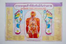 Massage Foot Reflexology Poster Training Teaching Tactic Printed