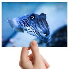 """Fotografía 6x4"""" - sepia calamar Pulpo Art 15x10cm #3221"""