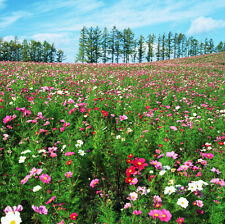 Fast Growing Wildflowers Fix Seeds 200 Seeds Rapid Growth Colorful Flowers K008