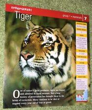 Endangered Animals Card - Mammal - Tiger