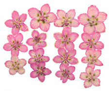 Prensado De Flores, Marsh Hierba de Parnassus, Rosa, materiales de artesanía de arte