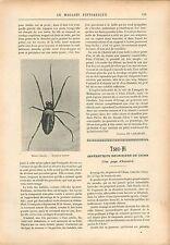 Halabé Insecte /Impératrice douairière Cixi/Tseu-Hi de Chine GRAVURE PRINT 1908
