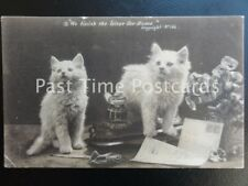 "c1902 - Two Little Kittens ""We finish the Letter for Home"" - Undivided Back"