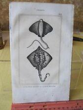 Vintage PRINT,FISH,1836,Comte De Lacepede, p1097
