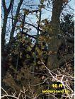 16ft LADDERFLAUGE ladder tree stand camo kit hunting deer camouflage system