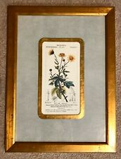 Framed Matted Botanical Print Chrysanthemum EXCELLENT CONDITION Yellow Floral
