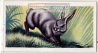 Rabbit Hare Vintage Ad Trade Card