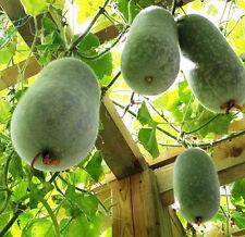 Bottle Gourd Seed 6 Seeds Lagenaria Siceraria Katydid Gourd Garden Seed Hot B091