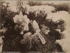 """""""KERRY & CO."""" EARLY VIEWS OF MT KOSCIUSKO, SNOWY MOUNTAINS c1890s group of 22"""