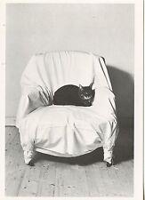POSTCARD / CARTE POSTALE PHOTO BRIGITTE LANGEVIN CHAT SUR UN FAUTEUIL / CAT CHAT