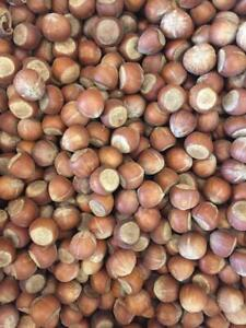 In Shell Fresh Hazelnuts, New Harvest, 4 Pounds