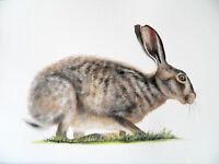 HARE ORIGINAL WATERCOLOUR PAINTING A3 Wildlife Fine Art By Sarah Featherstone