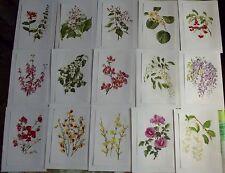 15 Ancienne Affiches Scolaire Botanique 1972 Chèvrefeuilles,Catalpa,Kiwi,Fusain